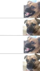 Happy and Sad Dog Animal meme template