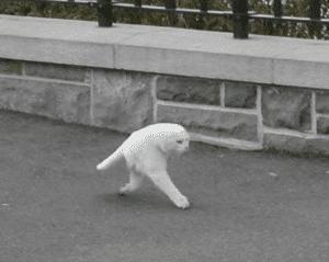 Weird Walking Cat Walking meme template