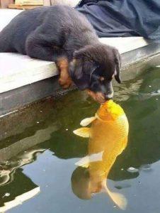 Dog Kissing Fish Wholesome meme template