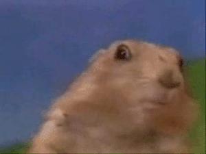 Dramatic Look / Dramatic Chipmunk Surprised meme template