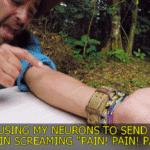 PAIN PAIN PAIN  meme template blank