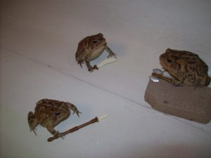 Three Frogs with Weapons Sword meme template