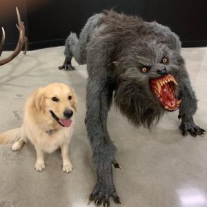 Scary Dog and Cute Dog Scaring meme template