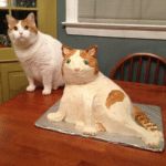 Cat and Cat cake  meme template blank