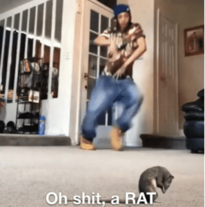 Oh shit a rat Surprised meme template