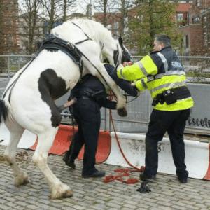 Horse humping cop NSFW meme template