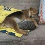 Dog cuddling with cat  meme template blank