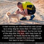 wholesome-memes cute text: A man running an ultra-marathon was joined by a stray dog for more than 77 miles (125 km) through the Gobi Desert, but he lost track of the dog after the race. With help from 20 volunteers, he finally found the dog after a 2-week search, named him Gobi and brought him back to live in Edinburgh. Photo courtesy Of Dion Leonard / straitstimes.com @factsweird  cute