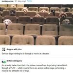 wholesome-memes cute text: bby-virgO Follow lucidaquarian doggos-with-jobs Service dogs training to sit through a movie at a theater. driftwooddragons It