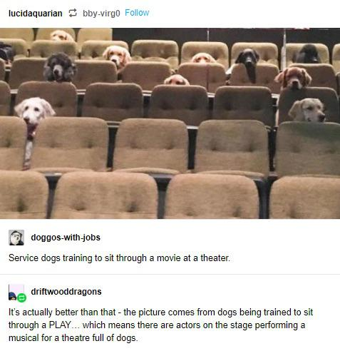 cute wholesome-memes cute text: bby-virgO Follow lucidaquarian doggos-with-jobs Service dogs training to sit through a movie at a theater. driftwooddragons It's actually better than that - the picture comes from dogs being trained to sit through a PLAY which means there are actors on the stage performing a musical for a theatre full of dogs