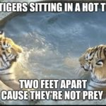 other-memes other text: 2,TiGERS SITTING IN A HOT TUB NOT PREY imgfli
