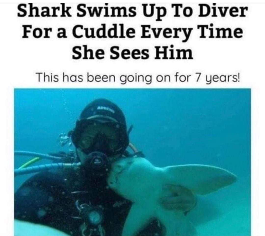 cute wholesome-memes cute text: Shark Swims Up To Diver For a Cuddle Every Time She Sees Him This has been going on for 7 years!