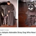 wholesome-memes cute text: MYMODERNMET.COM Monastery Adopts Adorable Stray Dog Who Now Lives Like a Friar  cute