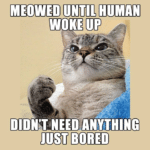 boomer-memes cats text: MEOWED UNTIL HUMAN WOKE ٣ DIDWT *NEED ANYTHING آلالا BORED