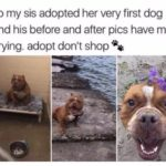 wholesome-memes cute text: so my sis adopted her very first dog and his before and after pics have me crying. adopt don