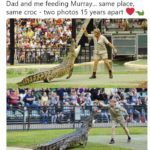 wholesome-memes cute text: Robert Irwin Follow @Robertlrwin Dad and me feeding Murray... same place, same croc - two photos 15 years apart limn 4:21 AM -3 Jul 2019  cute