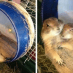 Hamsters cuddling Animal meme template blank