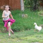 Goose chasing girl Uncategorized meme template blank