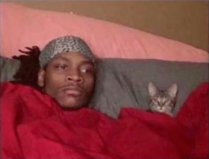 Man in bed with cat Cat meme template