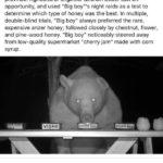 "wholesome-memes cute text: catchymemes Breaking news: A bear named ""Big boy"" was raiding honey production facilities near Turkey"