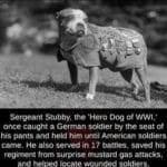 wholesome-memes cute text: Sergeant Stubby, the