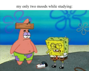 spongebob-memes spongebob text: my only two moods while studying: