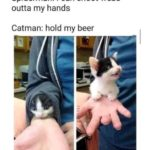 wholesome-memes cute text: Spiderman: I can shoot webs outta my hands Catman: hold my beer  cute