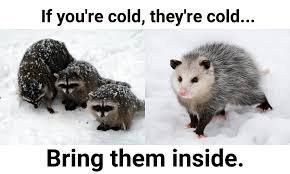 cute wholesome-memes cute text: If you're cold, thefre cold... Bring them inside.