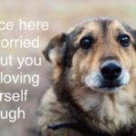 wholesome-memes cute text: Bruce here is worrie about you not loving yourself enough  cute