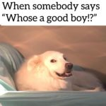 """wholesome-memes cute text: When somebody says """"Whose a good boy!?  cute"""