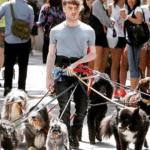 Daniel Radcliffe walking multiple dogs Animal meme template blank  Daniel Radcliffe, Dogs, Multiple, Walking