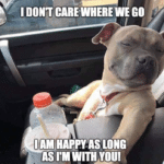 wholesome-memes cute text: I DON