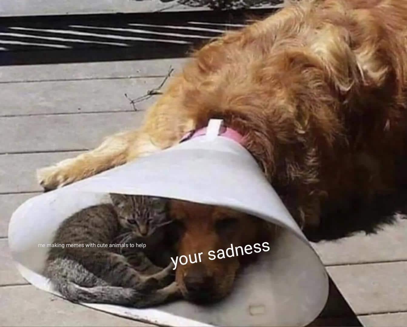 cute wholesome-memes cute text: me