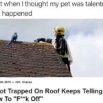 "other-memes dank text: Just when I thought my pet was talented this happened August 20"" —40K Snares Parrot Trapped On Roof Keeps Telling Fire Crew To Off""  Dank Meme, Parrot, Animal, Roof, Funny"
