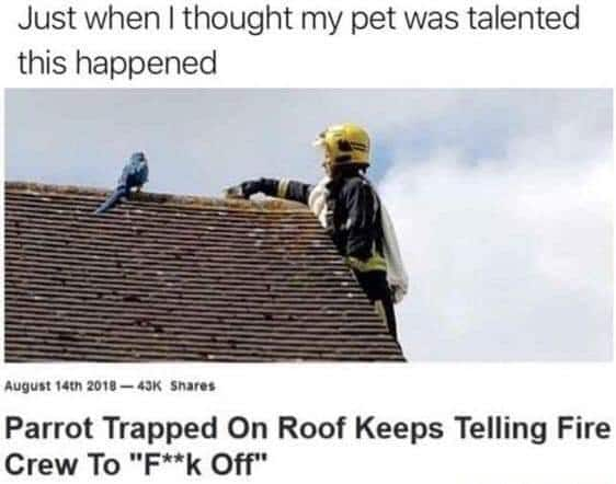 Dank Meme, Parrot, Animal, Roof, Funny other-memes dank text: Just when I thought my pet was talented this happened August 20