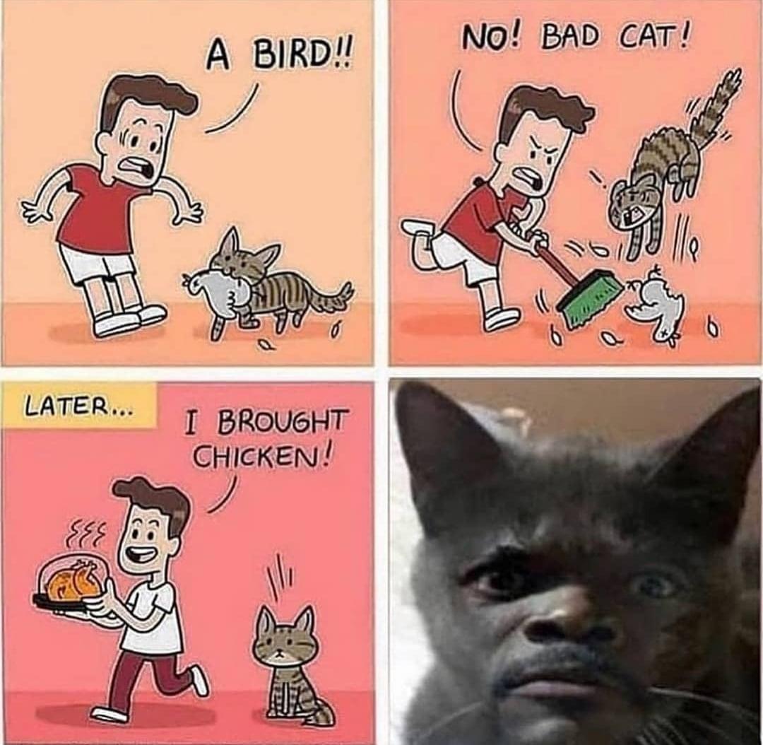 dank other-memes dank text: LATER... A BIRD!! Ι 6RoU6HT