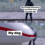 wholesome-memes cute text: Me having returned to my house mere seconds ago My dog  cute