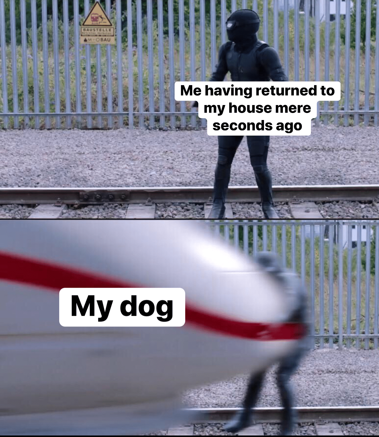 cute wholesome-memes cute text: Me having returned to my house mere seconds ago My dog