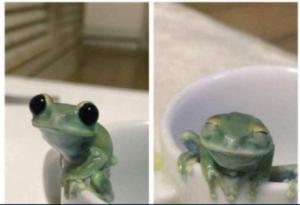 Happy frog Frog meme template