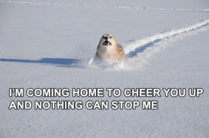 Im coming home to cheer you up and nothing can stop me Affection meme template