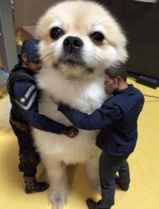 Captain America/ Chris Evans hugging a doggo Hugging meme template