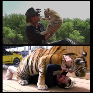 Joe Exotic with baby tiger and being attacked Killing meme template