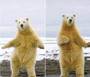 Polar Bear Dancing Dancing meme template