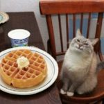 Happy cat and waffle Animal meme template blank