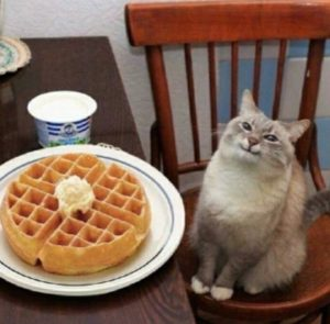 Happy cat and waffle Food meme template