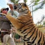 Joe Exotic feeding tiger Tiger King meme template blank  Tiger King, Joe Exotic, Feeding, Milk, Helping, Tiger, Animal, Vs, Food, Drinking