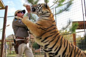 Joe Exotic feeding tiger Feeding meme template