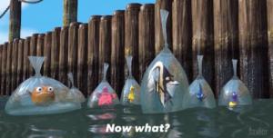 Finding Nemo 'Now what?' Pixar meme template