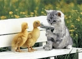 Kitten pointing gun at ducks Gun meme template