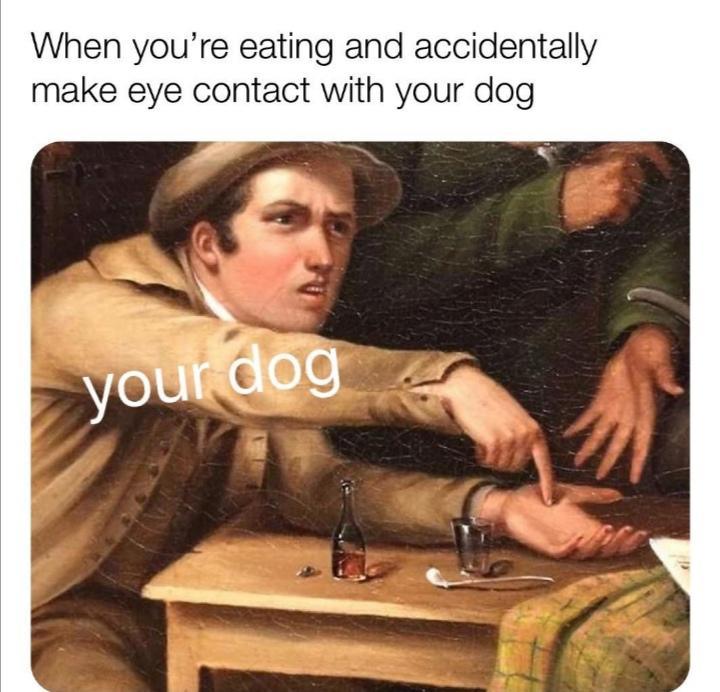 Dank,  other memes Dank,  text: When you're eating and accidentally make eye contact with your dog du